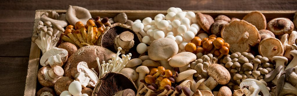 Different type of mushrooms with aphrodisiac effects