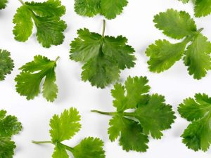 coriander is interesting herb. Someone love it and someone hate it but it is a powerful aphrodisiac?