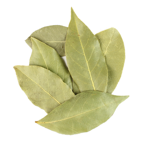 bay leaf on transparent background