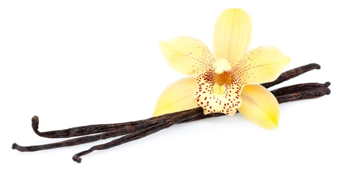 one piece of vanilla flower with root